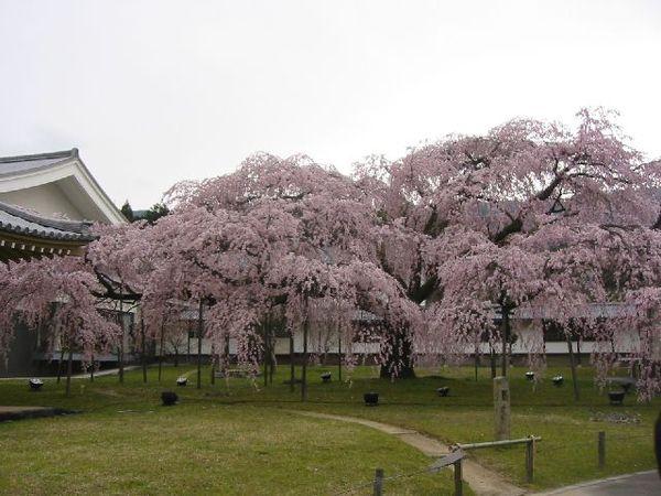 Daigoeihokan2009_3